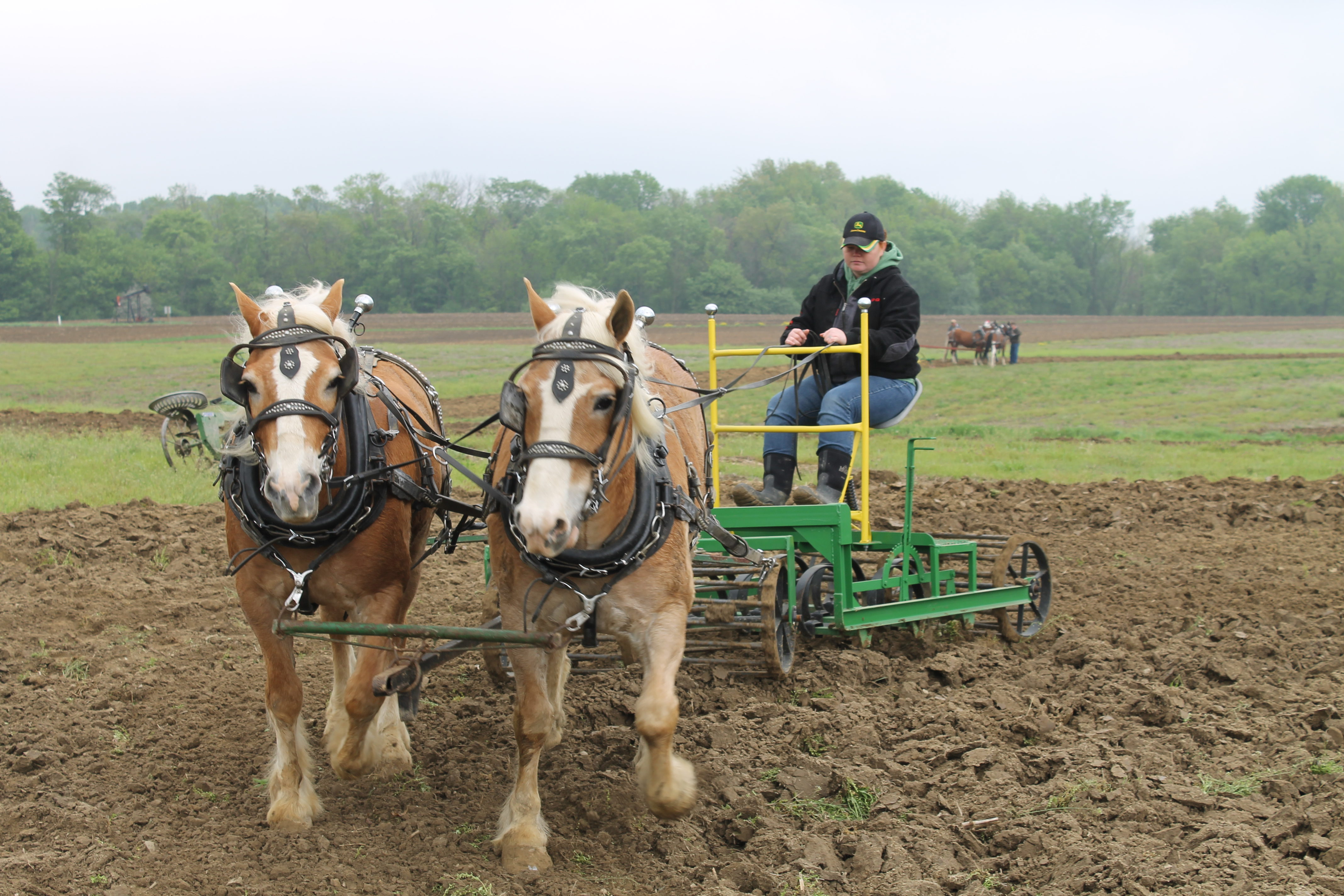 Horse plowing at Rohrer Farm is a spring tradition  Farm and Dairy