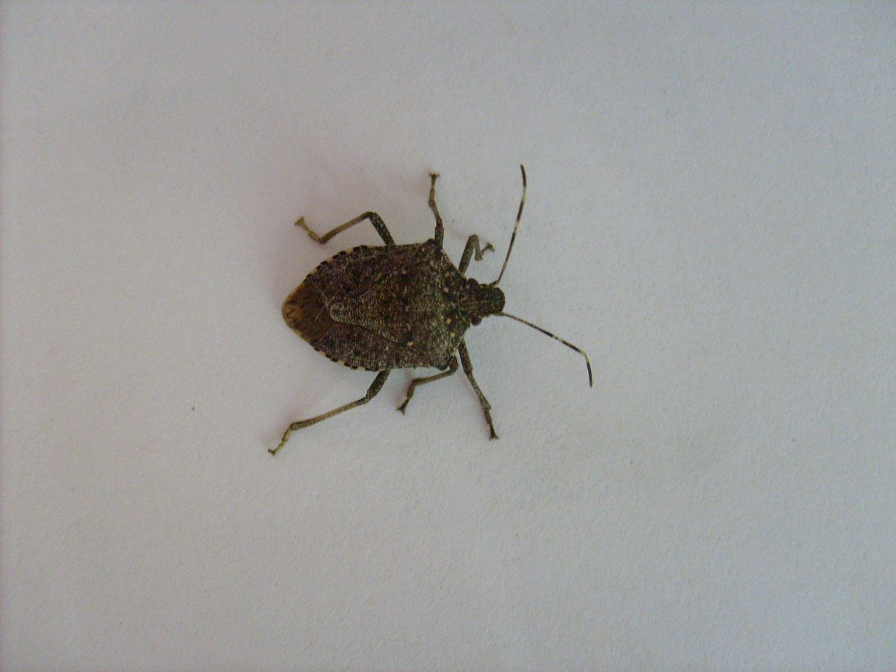 Small Grey Bugs In House - Architectural Designs