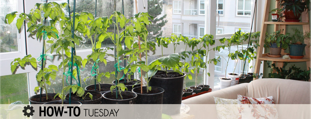 How Do I Grow Vegetables Indoors Over Winter? Farm And Dairy