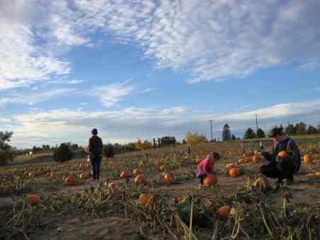 green-bluff-pumpkins