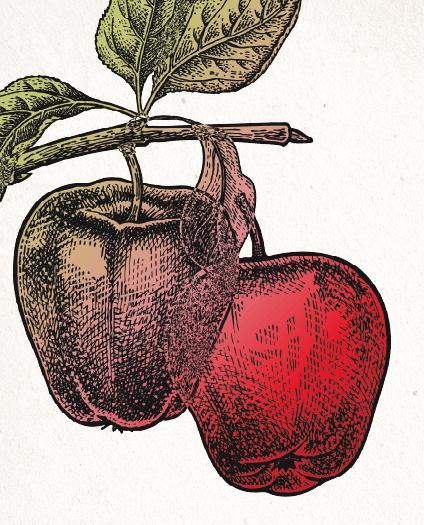 Amazing Washington Apples