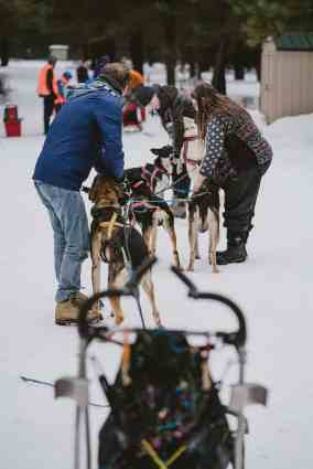 Capt Larry's dog sled team lines up near the entry chute