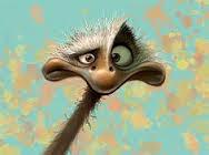 ostrich.jpeg