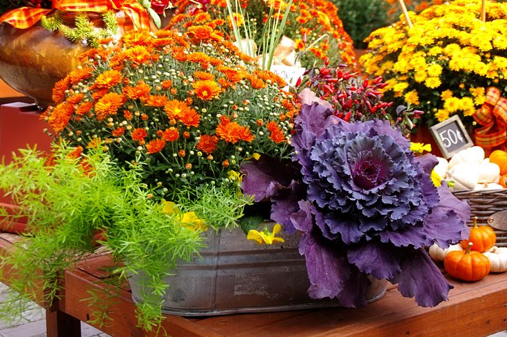 Fall Container Gardening Guide Conscious Living TV