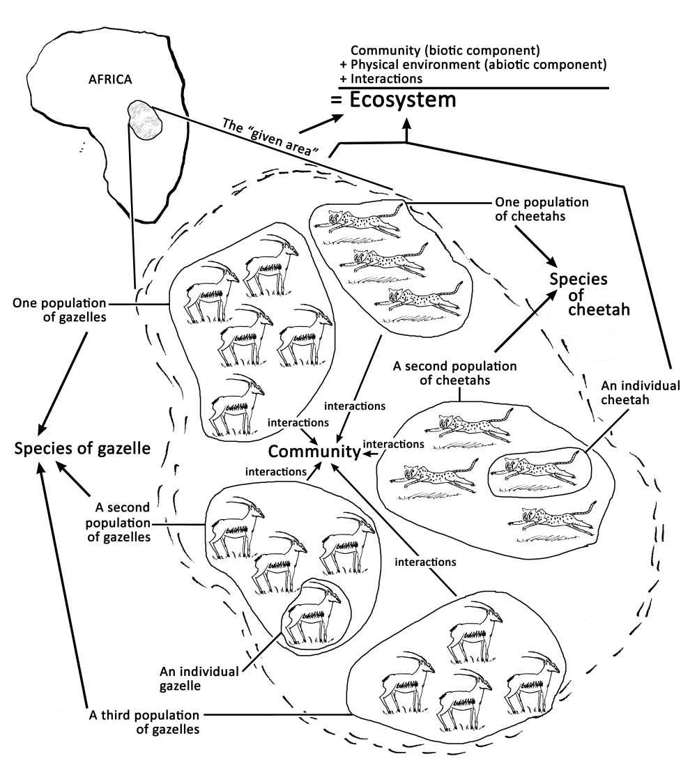 medium resolution of Ecological levels: from individuals to ecosystems (article)   Khan Academy