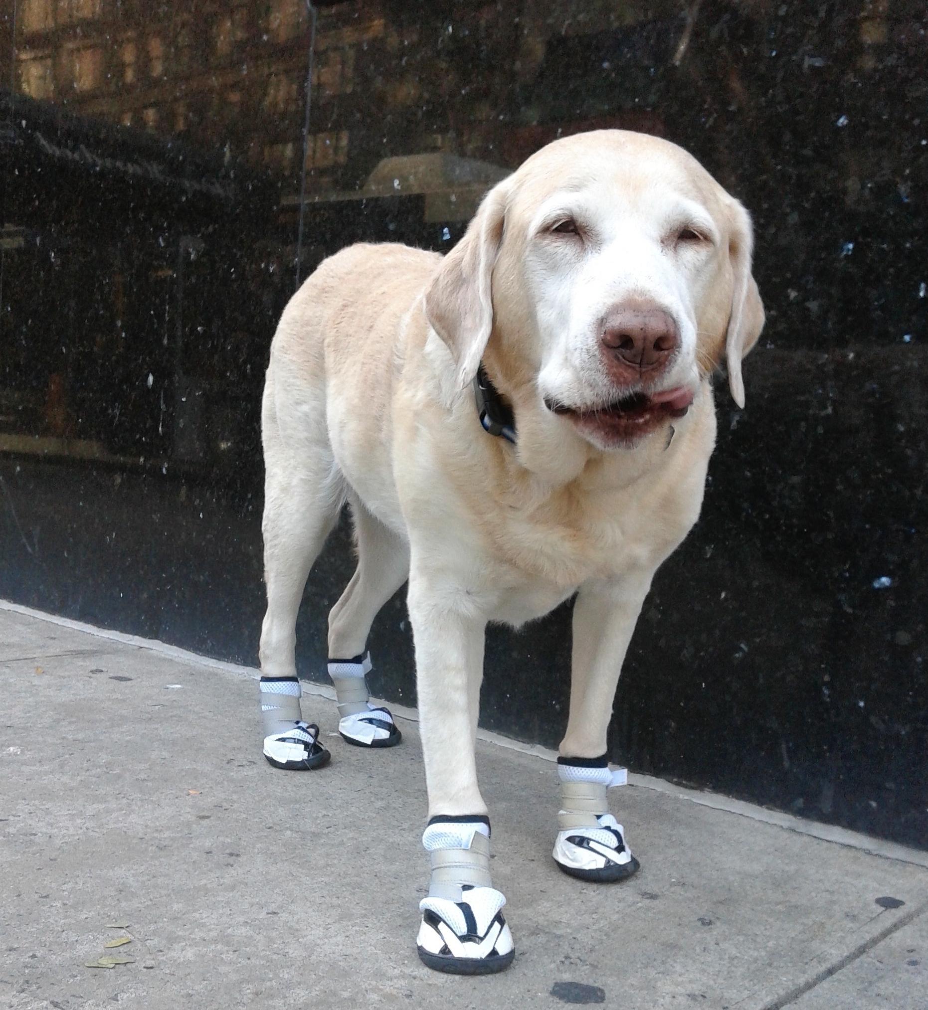 Orthopedic & Non Slip Shoes For Injuries, Arthritis