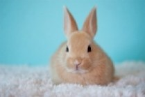 4-H Club Norfolk County Cottontail Club