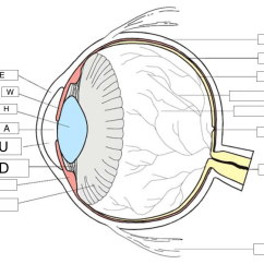 Human Eye Diagram Label Worksheet Pioneer P1400dvd Wiring Labeled Great Installation Of The Eyes Data Today Rh Del298 Bestattungen Eschershausen De Parts