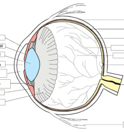 where is the outer front layer of the eye  [ 1151 x 889 Pixel ]