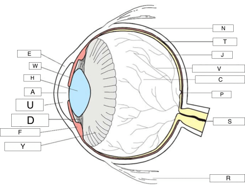 small resolution of where is the outer front layer of the eye