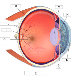 identify the label between the pupil and the cornea [ 1500 x 1500 Pixel ]
