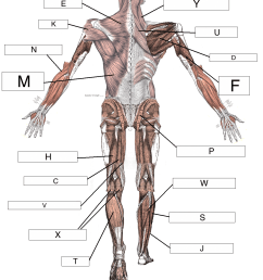 which label marks the deltoid muscle  [ 1063 x 1297 Pixel ]
