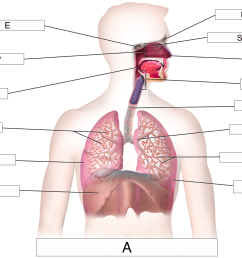 which letter identifies the pharynx  [ 1408 x 1125 Pixel ]