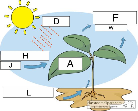 Photosynthesis Diagram Worksheet