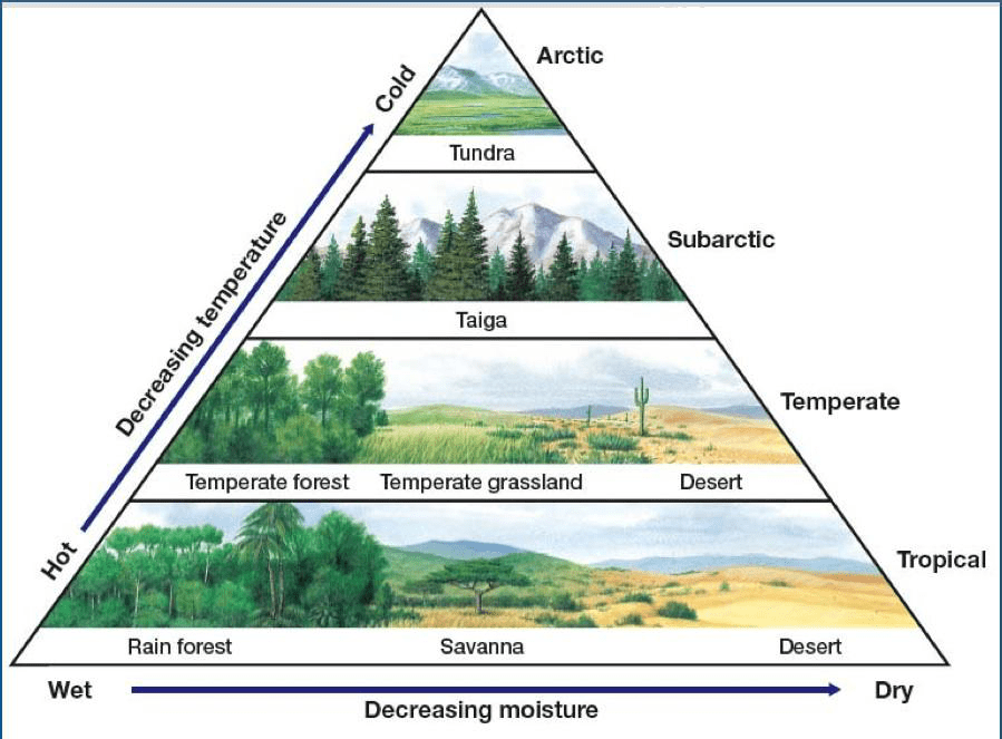 diagram of a tropical forest 2006 ford focus fuse panel climate zones and biomes lesson 0111 tqa explorer rain c taiga d desert