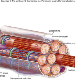 what is the outer layer shown in the diagram  [ 1204 x 684 Pixel ]