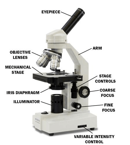 a diagram of microscope parts outlet wiring the lesson 0362 tqa explorer what part holds your sample