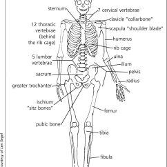 Diagram Of Skeletal Ribs S Plan Central Heating Wiring The System Lesson 0385 Tqa Explorer A Cervical Vertebrae B Radius C Femur D Rib Cage