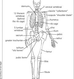 sternum d pelvis [ 1249 x 1499 Pixel ]