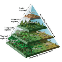 Diagram Of A Tropical Forest Dogwood Tree Climate Zones And Biomes Lesson 0111 Tqa Explorer Instructional Diagrams