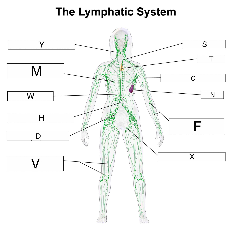 Immune System Defenses Lesson