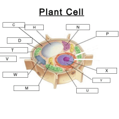 Parts Of A Cell Diagram Wiring Rj45 Structures Lesson 0422 Tqa Explorer Which Letter Denotes The Powerhouse