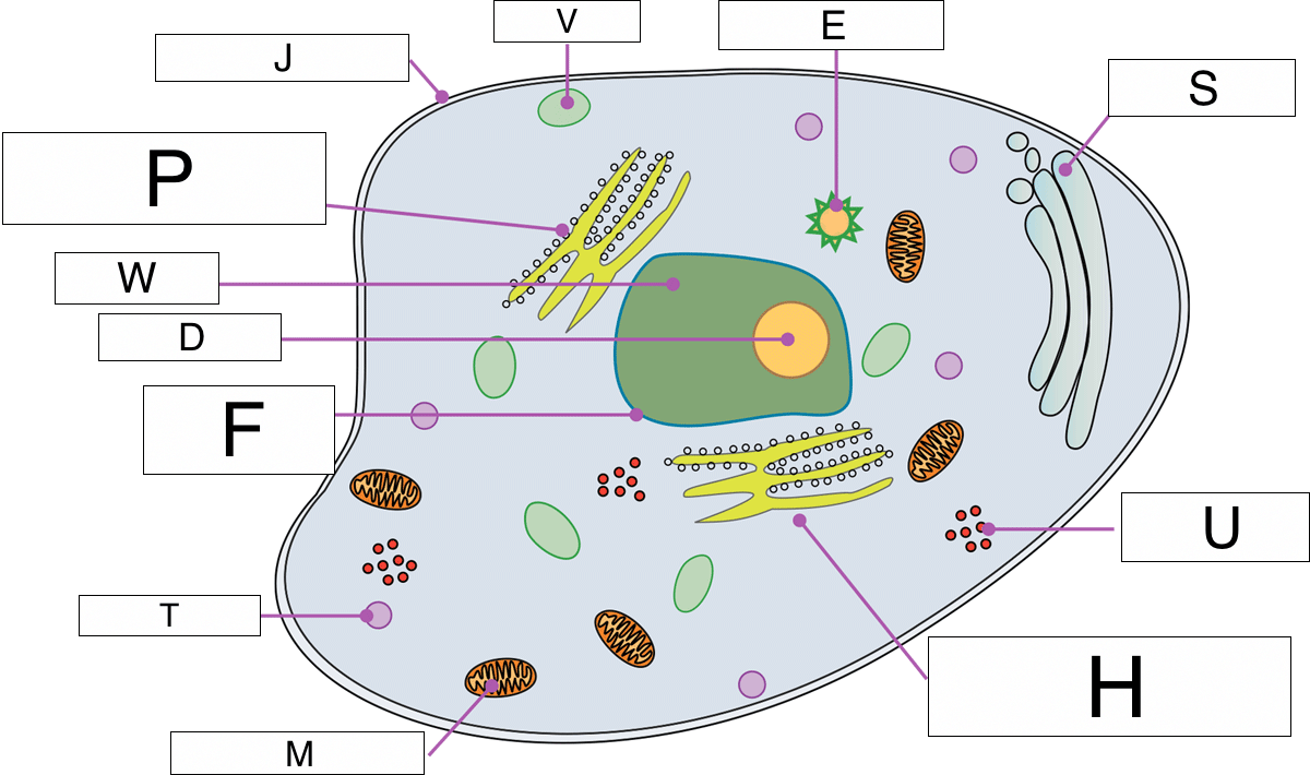 hight resolution of which part of the cell makes energy available to the cell