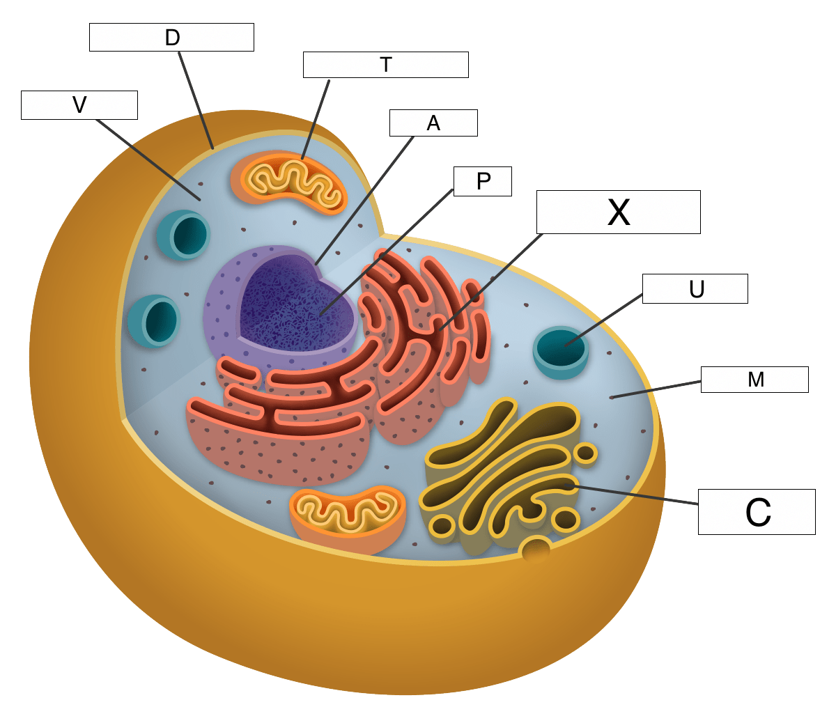 Cell Structures Lesson