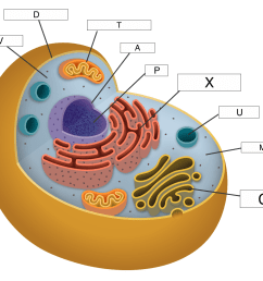 which part of the cell makes energy available to the cell  [ 1200 x 1038 Pixel ]