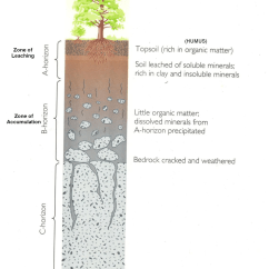 Soil Profile Diagram Of Michigan 1986 Honda Spree Wiring Soils Lesson 0088 Tqa Explorer