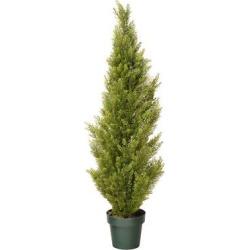Arborvitae with Green Pot (48)