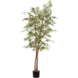 Deluxe Japanese Maple Tree in Black Plastic Pot with American made Excelsior (72), Green