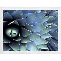 Pattern in Agave Cactus by Adam Jones White Wood Framed Photographic Print, Blue