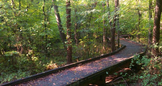 Flat Creek Nature Area, Peachtree City, Georgia. | Southern Conservation Trust