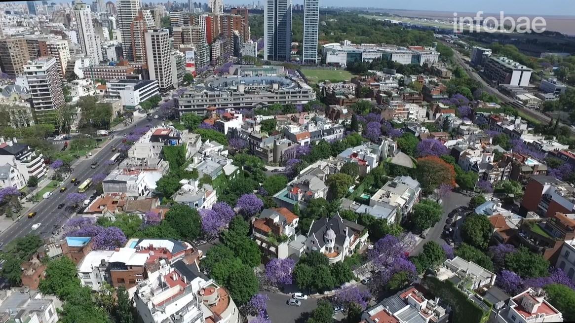 En octubre Buenos Aires se pinta de lila con el florecimiento de los jacarandás