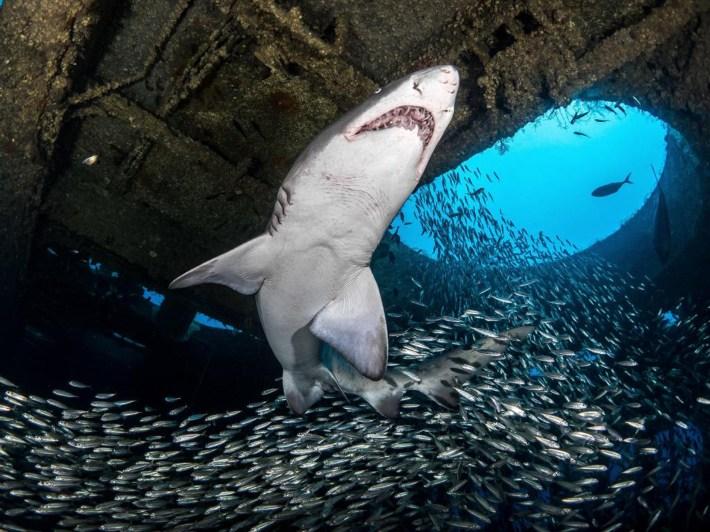 Sus impactantes fotos ya recorren el mundo entero y son más que especiales para quienes aman la vida submarina