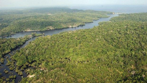No todos los ambientes tienen la biodiversidad de la cuenca del Amazonas, señaló el autor. (EFE)
