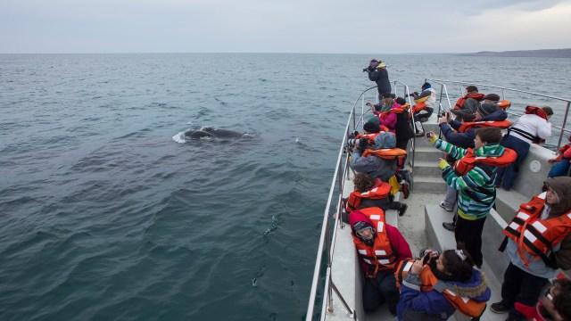 Avistaje de ballenas en Chubut