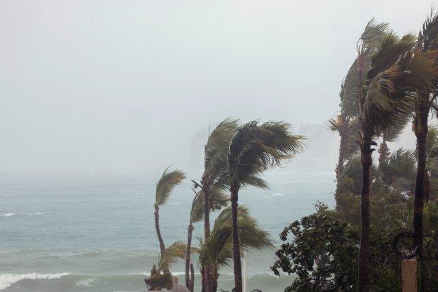 Palmeras arrasadas por el viento en Los Cabos, Baja California Sur, Mexico(REUTERS/Fernando Castillo)