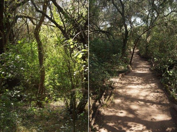 En el centro de investigación, el camino está delineado con troncos para evitar el riesgo de pisar una víbora (Raquel Peiro)