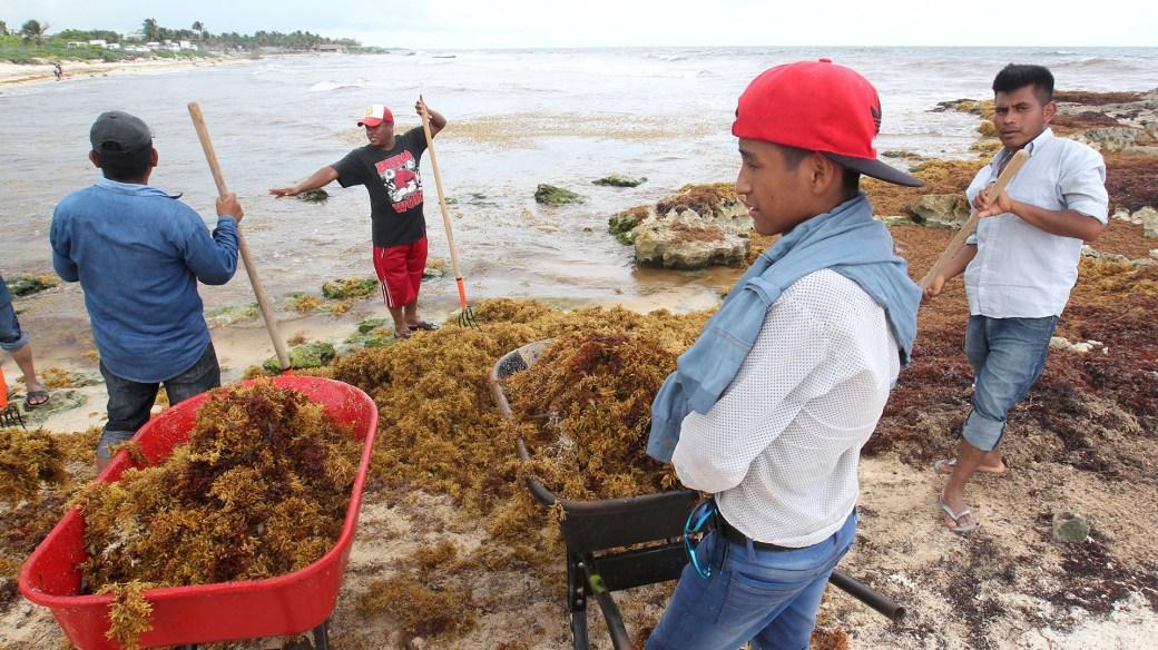 Sargazo en las playas de México (EFE)