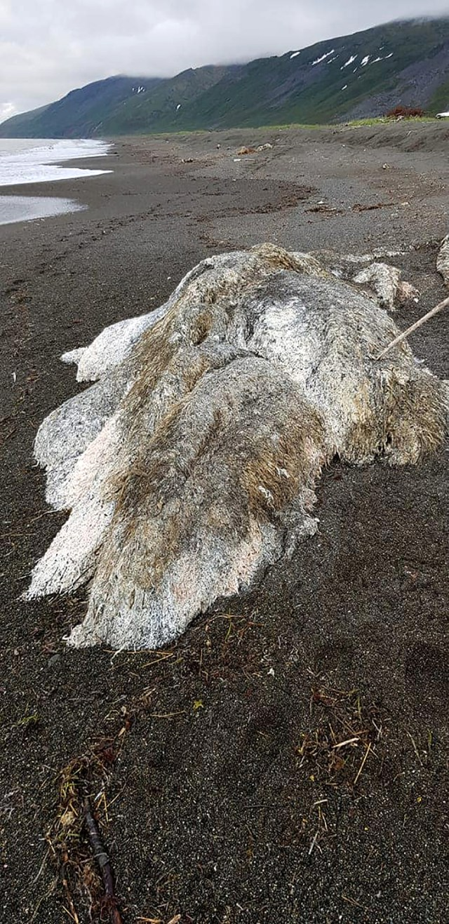 Lo hallado podía ser parte de un cadáver de alguna criatura marina