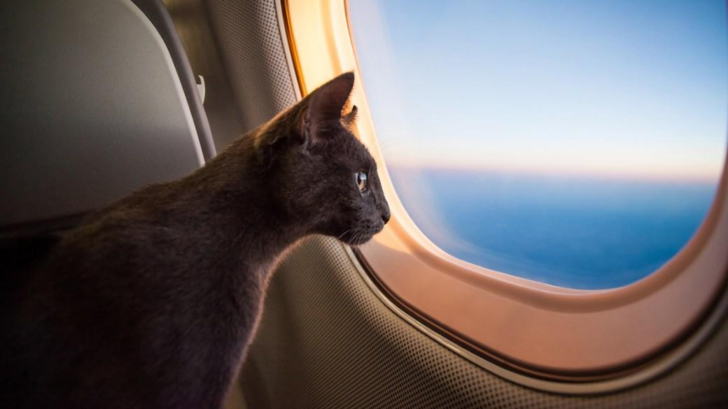 El felino de apoyo emocional permaneció en la nave mientras que la menor fue removida