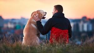 Este año también habrá otro reglamento en California que buscará el bienestar de las mascotas en procesos de divorcio (Foto: Archivo)