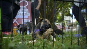 Hay miles de mascotas esperando a ser adoptadas en refugios de todo el mundo (Foto: Gustavo Gavotti)