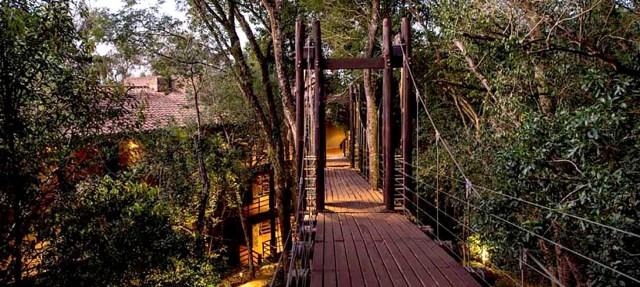 Se pueden recorrer varios senderos de la selva dentro del espacio mismo de las Suites.