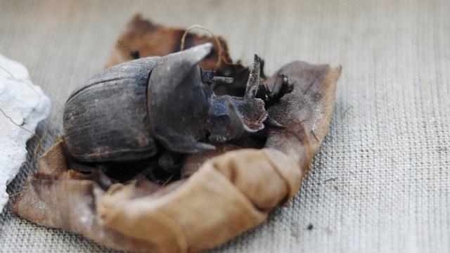 Un escarabajo momificado(REUTERS/Mohamed Abd El Ghany)
