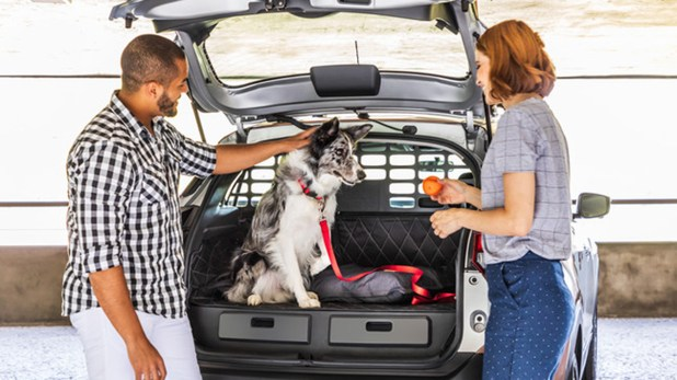 Por seguridad el animal no puede ir suelto dentro del auto.