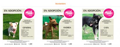 Perros abandonados en el metro noviembre