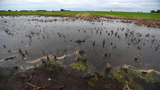 La pérdida para el sector de la producción de maíz sería de 5,4 millones de dólares (REUTERS/Marcos Brindicci)